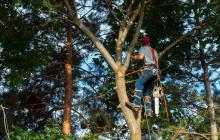 Services - Tree Pruning